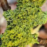 Spring lichen ramble