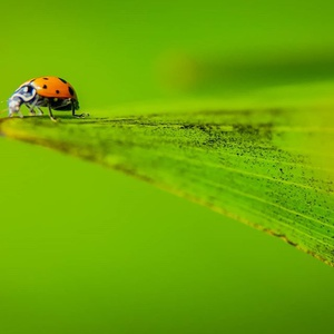 Nature Adventurers: Adventures with Ladybugs!