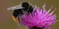 Pollinators in the Capital Region Workshop