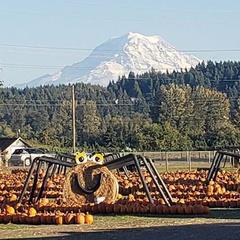 Spooner Farms Harvest Festival