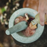 Creating an Herbal First Aid Kit