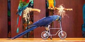Happy Birds End of Summer Show
