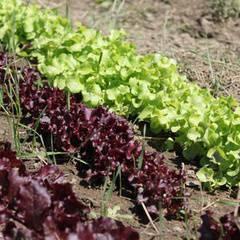 Organic Gardening Course