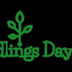 Seedlings Daycare