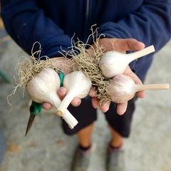 Richmond Garlic Fest