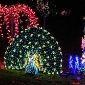 Garden d'Lights at the Bellevue Botanical Garden