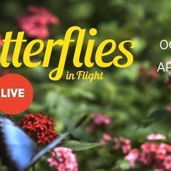 Butterflies in Flight: Special Exhibition