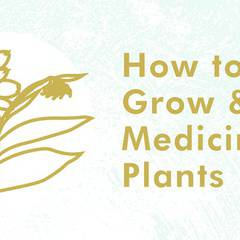 How to Grow and Use Medicinal Plants