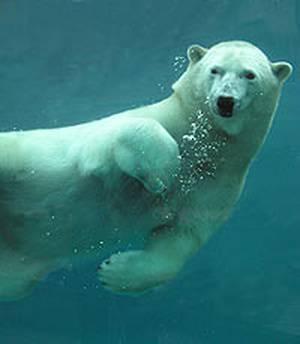 Toronto Zoo's 2nd Annual Polar Dip