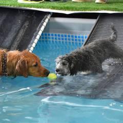 Sunday funday Dog Pool Party