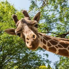Critter Club: Safari Adventure