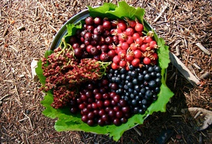 Edible & Medicinal Plants of the Pacific Northwest: Herb Walk