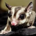 Urban Safari Rescue Society online live animal presentations