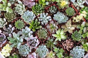 Huge Succulent & Cactus Plant Sale!