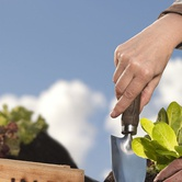 Down to Earth: Tips & Tricks for Spring Gardening