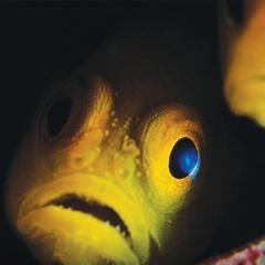 Halloween at the Vancouver Aquarium
