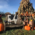 Thomasson Family Farm October Pumpkin Patch