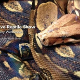 Austin Reptile Shows at Mt. Playmore