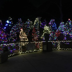 Tree Decoration Day for Wild Nights and Holiday Lights
