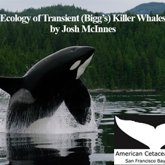 Ecology of Transient (Bigg's) Killer Whales, Josh McInnes - American Cetacean Society - SF Bay Chapter