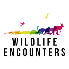 Wildlife Encounters