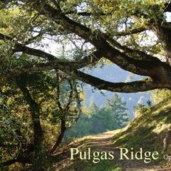 Pulgas Ridge