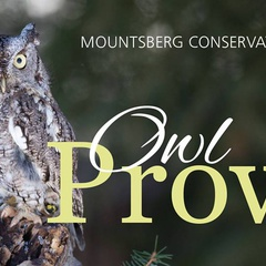 Owl Prowl - Family