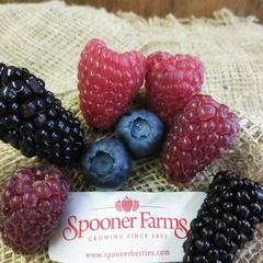 Spooner Farms