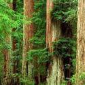 Big Basin Founders' Day and Redwood Jubilee