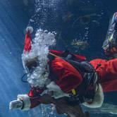 Holiday Traditions At Vancouver Aquarium