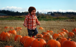 The 5 Pumpkin Patches & Corn Mazes in Greater Victoria