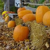 Pumpkin Sunday