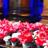 94th Annual Sacramento Camellia Show