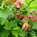 Summer Herb Walk, South Glenmore Park