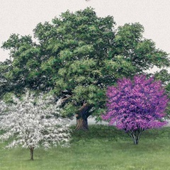Selection, Planting and Care of Your Trees