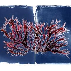 The Curious World of Seaweed, Josie Iselin