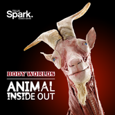 BODY WORLDS: ANIMAL INSIDE OUT