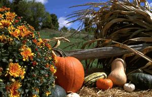 October Harvest Festival at Forsythe Family Farms