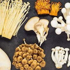 The Magic and Science of Medicinal Mushrooms