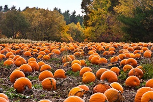 Pumpkin Patch and Farm Day