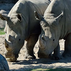 White Rhino Open House