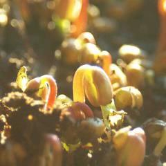 Kickstart your Garden