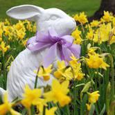 2018 Easter Bunny Hunt
