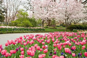 """Dallas Blooms """"Sounds of Spring"""""""