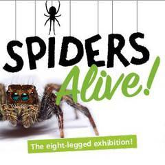 Spiders Alive! Opening Weekend