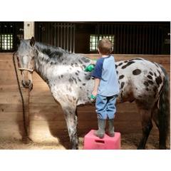 Cowboy Jerry's Horses