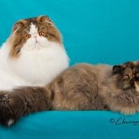 TICA International Cat Show