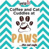 Yelp Event: Coffee and Cat Cuddles at Paws