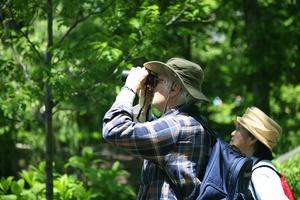 Bird Walk with Steve Romaine, Bird Enthusiast and Naturalist