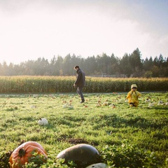 McNab's Corn Maze & Produce Farm